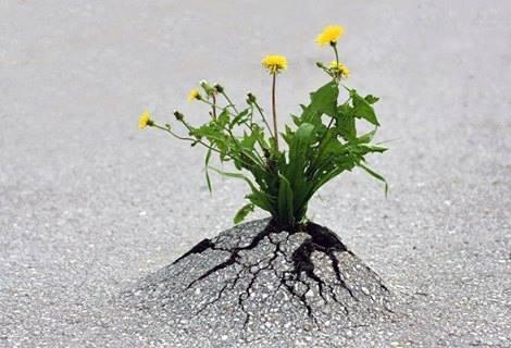 گل در آمد از قیر
